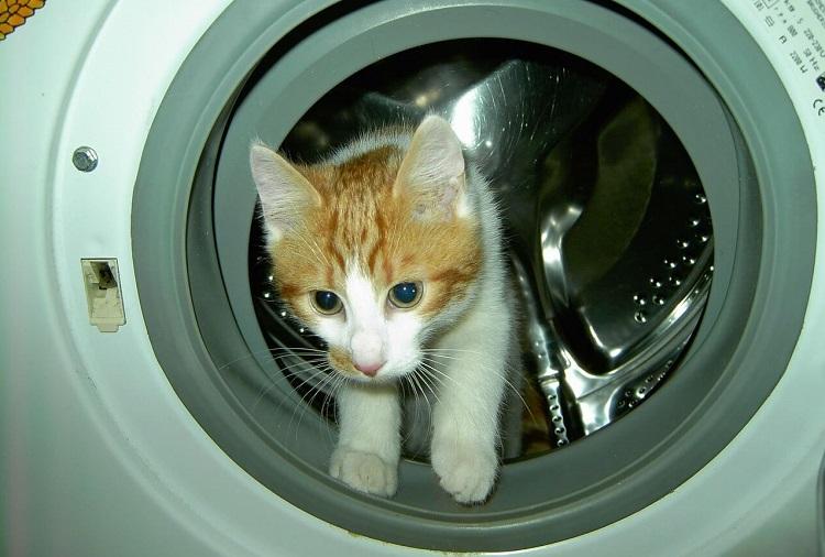 tierhaare-in-der-waschmaschine